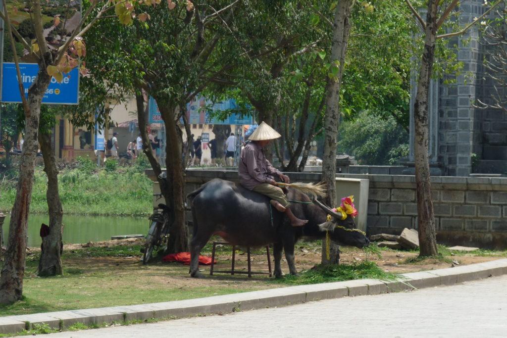 Wietnamczyk